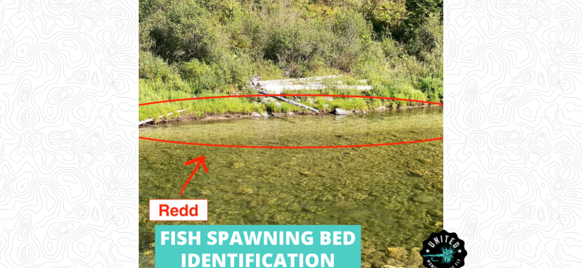 Fish Spawning Bed Identification